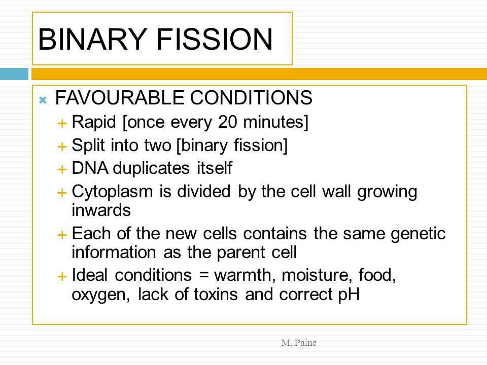 BINARY FISSION FAVOURABLE CONDITIONS Rapid [once every 20 minutes]